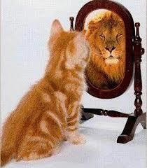 cat.lion